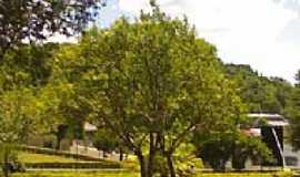 Enéas Marques - Enéas Marques-PR-Árvores na Praça Municipal-Foto:Giovanio Gonçalves