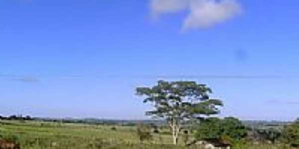 Área rural de Esperança Nova-Foto:dimascorporation