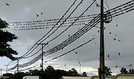 Gua�ra - Gua�ra-PR-Andorinhas na rede el�trica-Foto:Ricardo Mercadante