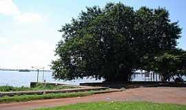 Gua�ra - Gua�ra-PR-Grande �rvore na margem do Rio Paran�-Foto:waferre