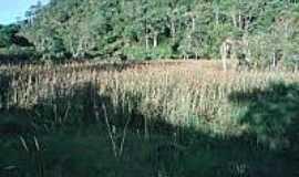 Herval Grande - Vegetação em Herval Grande-Foto:guialistanet.