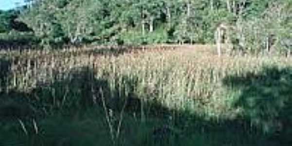 Vegetação em Herval Grande-Foto:guialistanet.
