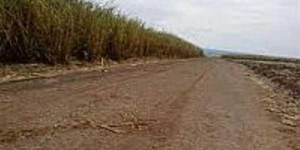 Cana na beira da estrada de Iguatemi-Foto:blogdogiesbrecht.