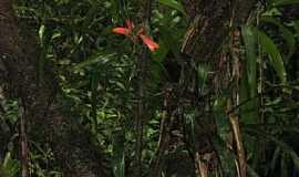 Itaqui - Itaqui-PR-Macaco atrás da Bromélia-Foto:ws.moura@terra.com.br