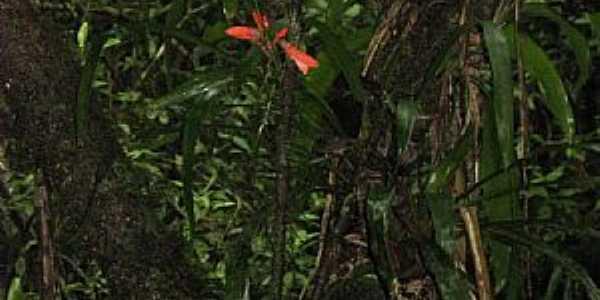 Itaqui-PR-Macaco atrás da Bromélia-Foto:ws.moura@terra.com.br