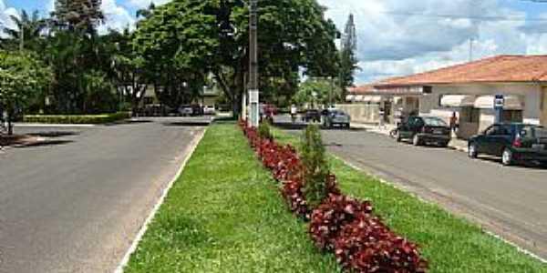Jaboti-PR-Canteiro central da Avenida-Foto:Guilherme A.