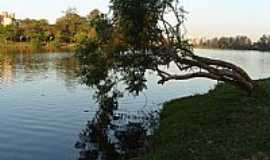 Londrina - Londrina-PR-Árvore caída no Lago Igapó-Foto:Sofia Prado