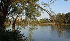 Londrina - Londrina-PR-Árvores na orla do Lago Igapó-Foto:Sofia Prado