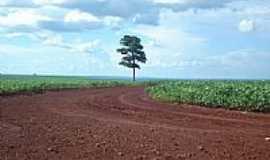 Malu - Árvore solitária nos campos de soja em Malu-Foto:João Carlos Benetton