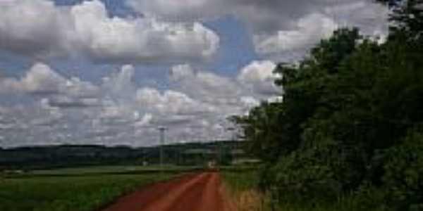 Estrada em Margarida-Foto:Lynne Iser.