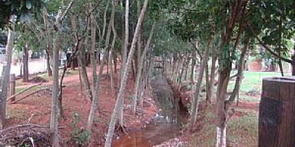 Marilena-PR-Córrego no Parque Iracema-Foto:lindo42