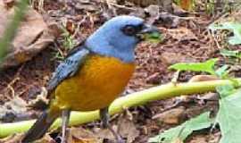 """Mato Rico - Birdwatching em Mato Rico-PR-Foto:Dimas""""Matungo"""""""