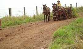 Mato Rico - Transporte rural em Mato Rico-PR-Foto:JC.SOL NASCENTE