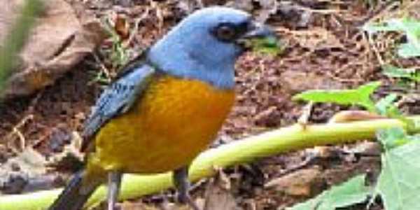 Birdwatching em Mato Rico-PR-Foto:Dimas