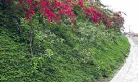 Ibirapitanga - A natureza é perfeita  em Ibirapitanga Bahia., Por robson assis