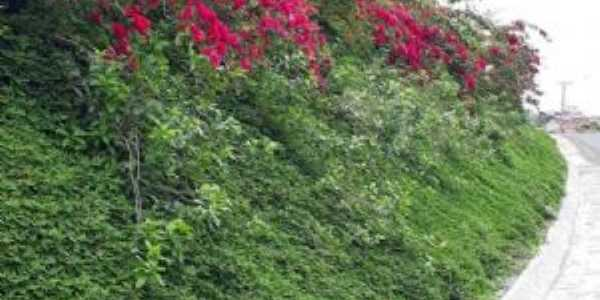 A natureza é perfeita  em Ibirapitanga Bahia., Por robson assis