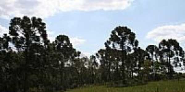 Antiga Fazenda Pinhalzinho-Foto:pedlowma
