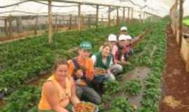 Nova Prata do Igua�u - agricultura, Por ALEXANDRE