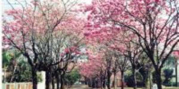 primavera PSO do Norte, Por patricia