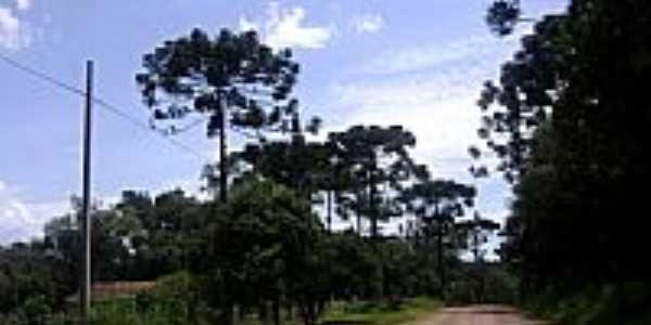 Estrada rural-Foto:Artemio C.Karpinski