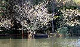 Porto Mendes - Porto Mendes-PR-Mata ciliar no Lago de Itaipu-Foto:Ricardo Mercadante