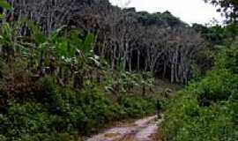 Igrapiúna - Trilha do Seringal na Reserva Ecológica Michelim em Igrapiúna-BA-Foto:Caio Graco Machado