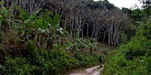 Trilha do Seringal na Reserva Ecológica Michelim em Igrapiúna-BA-Foto:Caio Graco Machado