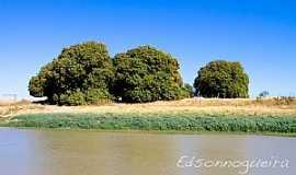 Iguira - Iguira-BA-Mangueiras na beira do rio-Foto:Edsonnogueira