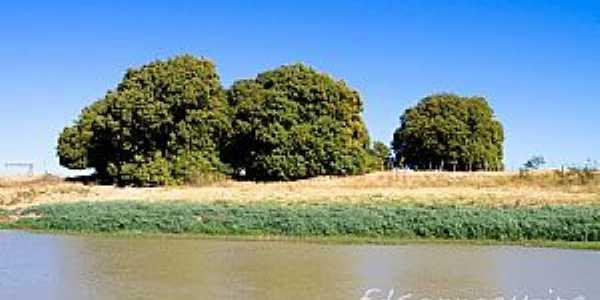 Iguira-BA-Mangueiras na beira do rio-Foto:Edsonnogueira