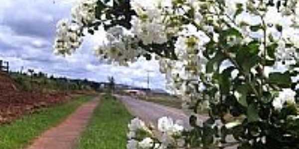 Flores na Rodovia em Sabáudia-Foto:leandro renato ferre…