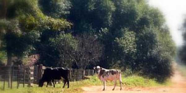 Santa Esmeralda-PR-Bovinos em estrada rural-Foto:zanicotti.blogspot.com