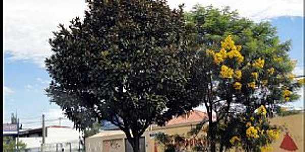 Santa Quitéria-PR-Flores na Avenida-Foto:Reginaldo Levinski