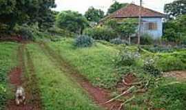 Santo Antônio do Palmital - Casa na Fazenda Josana em Santo Antônio do Palmital-Foto:pellegrini32