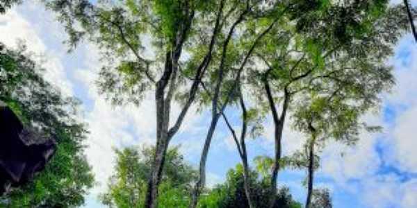 parque ambiental do ribeirão itamaraty, Por carlos