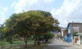 Ipiaú - Ipiaú-BA-Sibipirunas em flor na avenida-Foto:MARCELO S F
