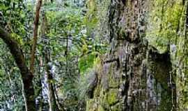 São Roque - Paredão na trilha para Cachoeira da Onça no Distrito de São Roque-Foto:Ricardo Mercadante