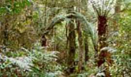 Telêmaco Borba - Imagem do Parque