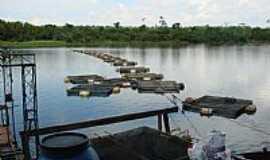 Terra Rica - Criação de Tilápia no Rio Coroa do Frade em Terra Rica-PR-Foto:Isa Lanziani