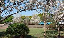 Terra Rica - Florada de Ipê Branco na Praça dos Pioneiros em Terra Rica-Foto:Isa Lanziani