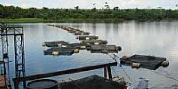 Criação de Tilápia no Rio Coroa do Frade em Terra Rica-PR-Foto:Isa Lanziani