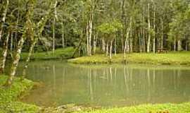 Tunas do Paraná - Parque Estadual de Campinhos.