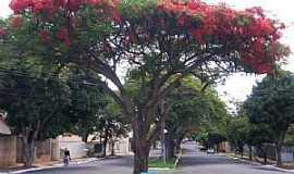 Umuarama - Umuarama-PR-Flamboyant na Av.Rio de Janeiro-Foto:Udson Pinho