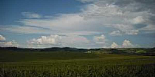 Plantação de Milho dentro da Cratera-Foto:Wagner Munaretto