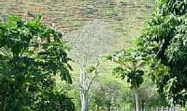 Itachama - Imagem rural-Foto:nandorock