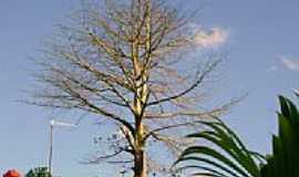 Itachama - Imagem-Foto:nandorock