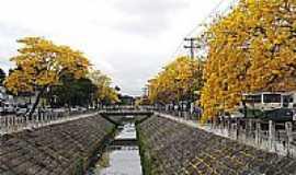 Campos dos Goytacazes - Ipês amarelos no canal em Campos dos Goytacazes-Foto:alexsander72