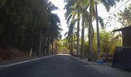 Carmo - Carmo-RJ-Coqueiros na entrada da cidade-Foto:Raymundo P Netto