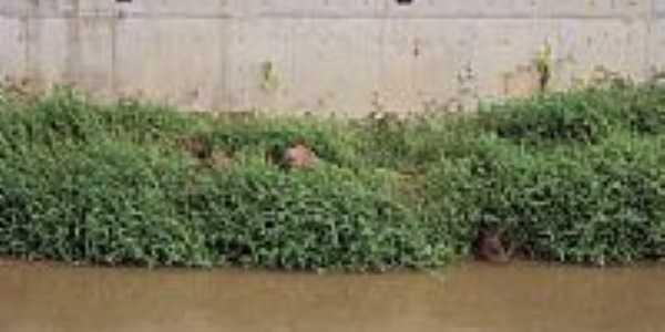 Capivaras no Rio Bengala em Conselheiro Paulino-Foto:Ricardo Camillo