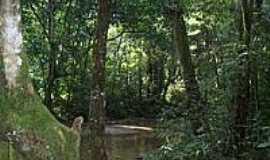 Duque de Caxias - Parque Natural Municipal da Taquara em Duque de Caxias-Foto:Leonardo S. Oliveira