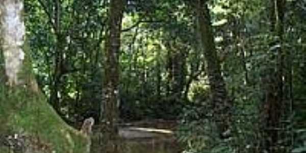 Parque Natural Municipal da Taquara em Duque de Caxias-Foto:Leonardo S. Oliveira